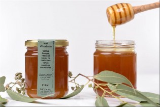 Miel Eucalyptus